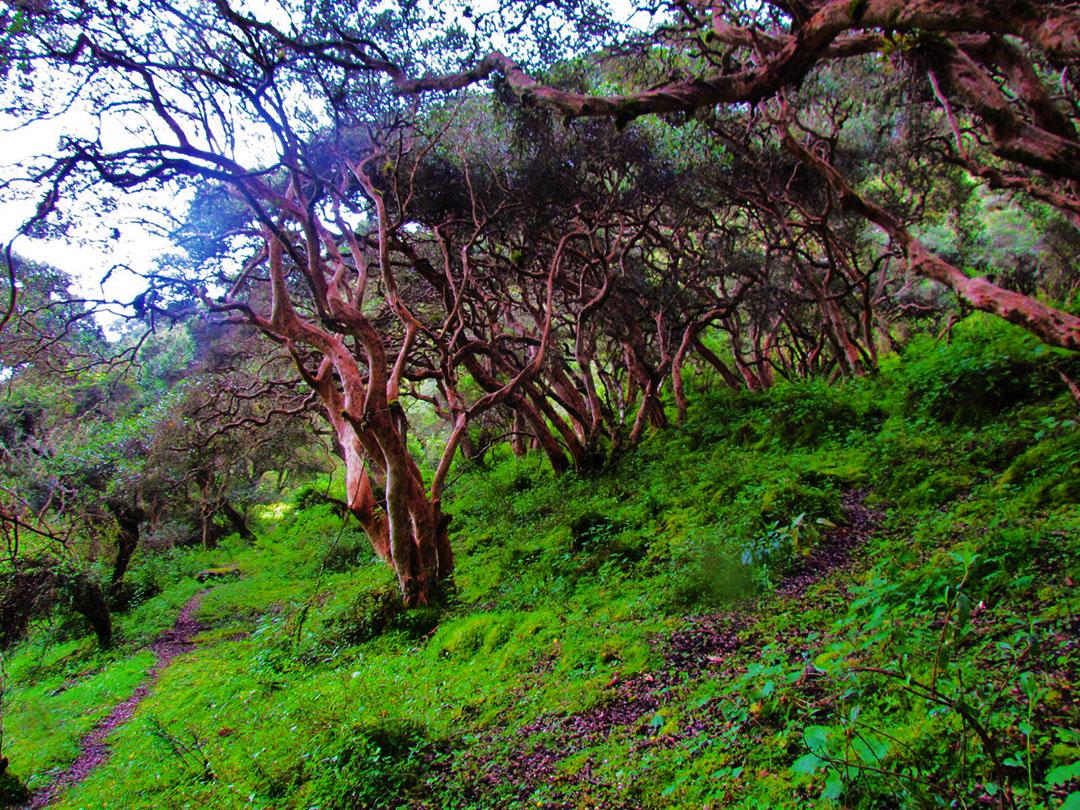 Authocton forest of Choquechaca ValleyD
