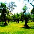 Bosque del Olivar